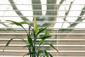 White blinds and a green plant